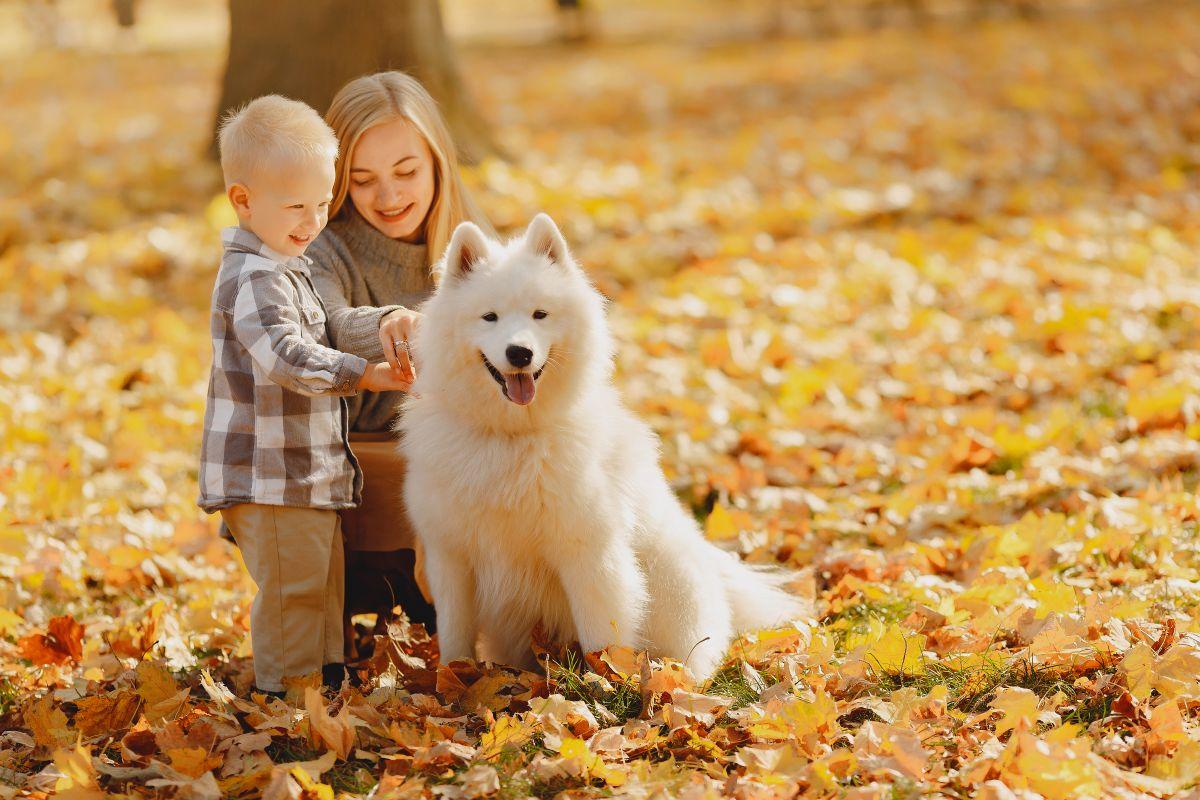 Tippek a kutyatartáshoz – 2.